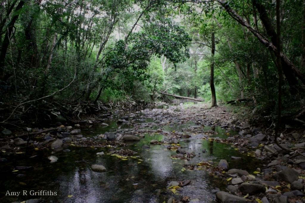 Qld Rainforest