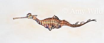 Sea Dragon Art, Marine Art