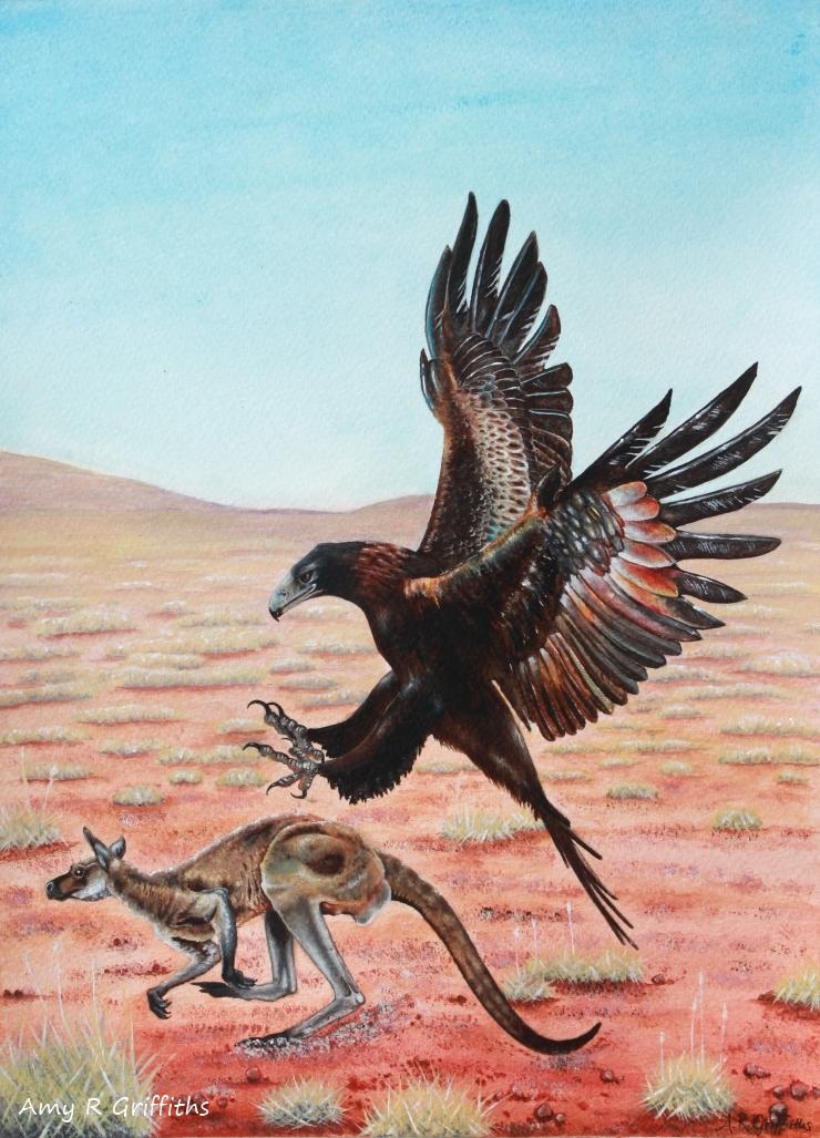 wedge-tailed eagle art