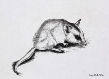 Zoological art