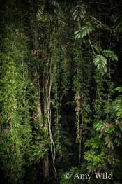 Malaysian Rainforest
