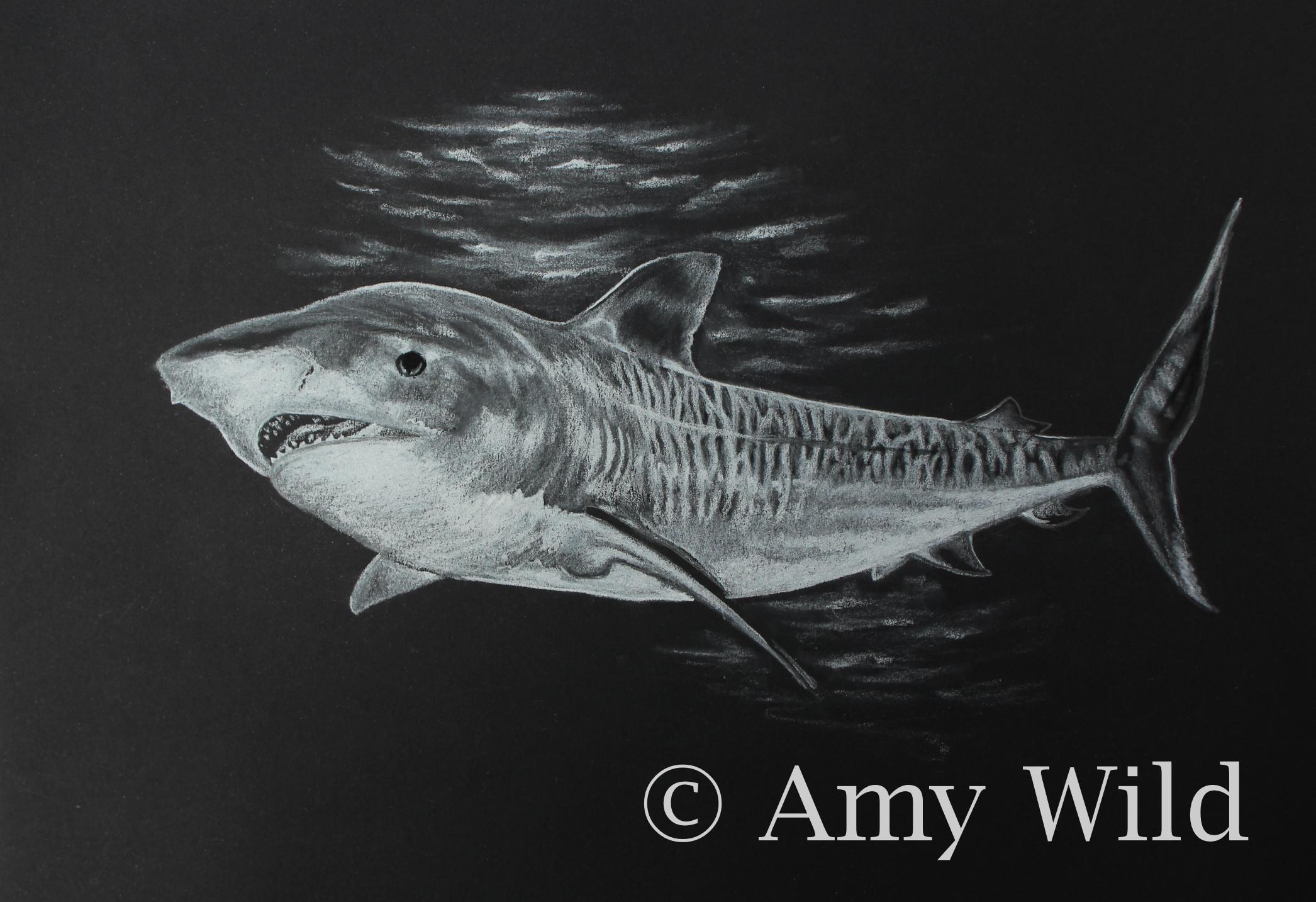 Tiger Shark Art