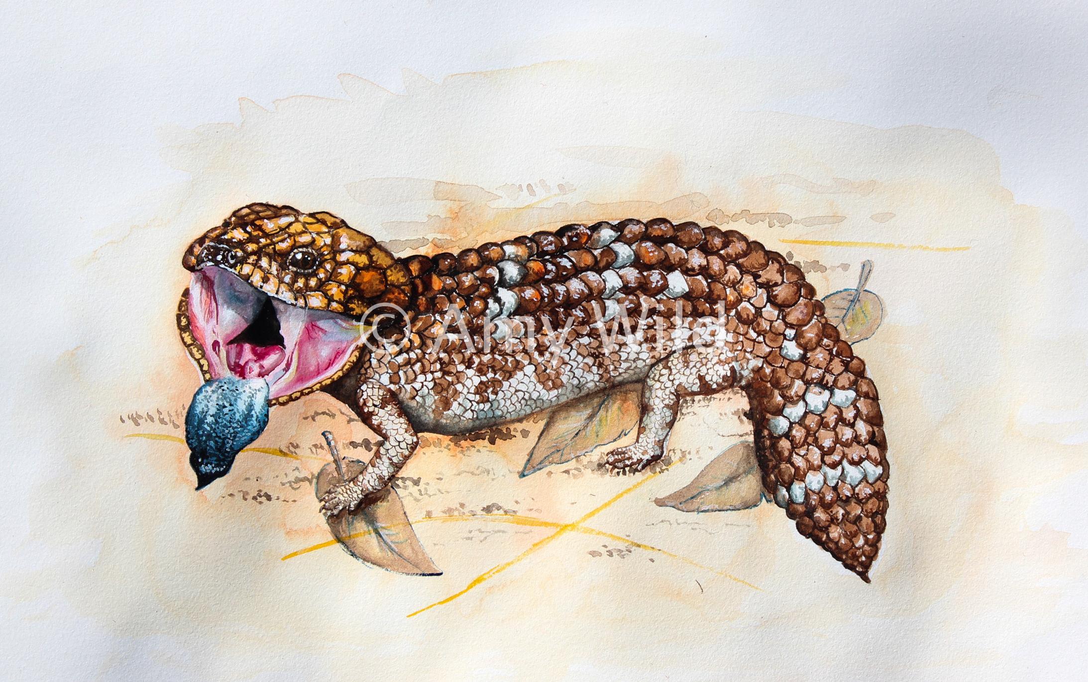 Bobtail Lizard Art